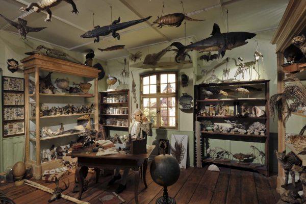 08-Musee_ZoologiqueCabinet_JHermannMathieu_Bertola_Musees_de_la_Ville_de_Strasbourg